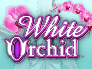 white-orchid-slots-game